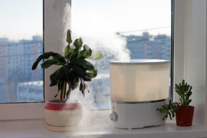 Best Plant Humidifiers Reviews: Which One for Plants is Best In 2020?